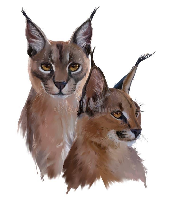 Dois gatos Caracal ilustração royalty free