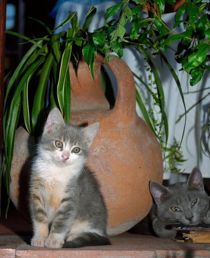 Dois gatos cinzentos pequenos e um potenciômetro tradicional da água em uma jarda em Kak imagem de stock