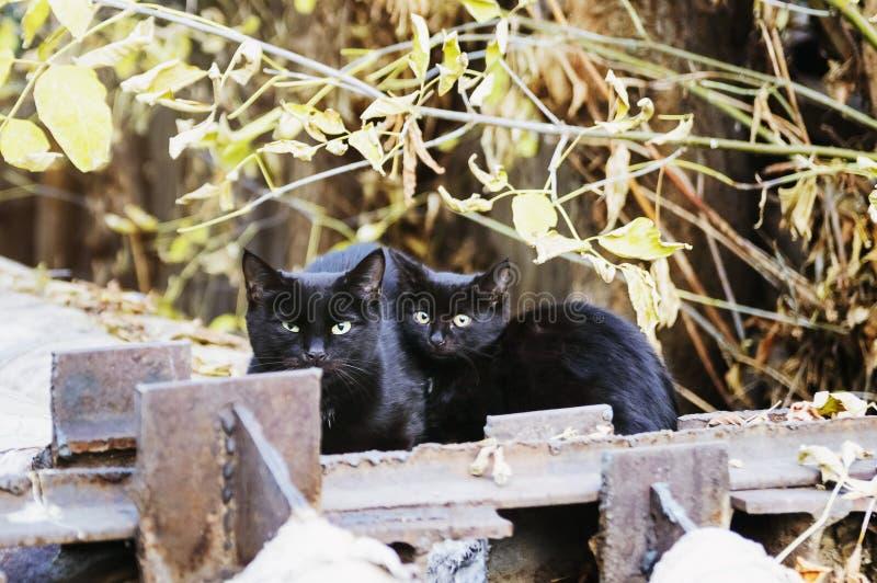 Dois gatos dispersos sentam-se na rua fotografia de stock