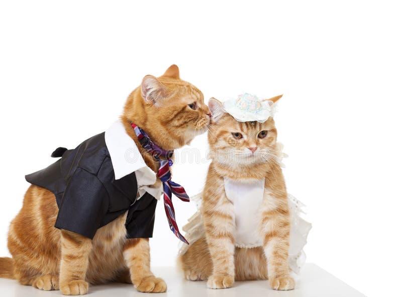 Dois gatos no amor isolados imagens de stock