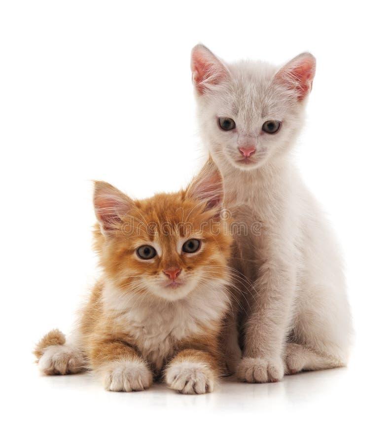 Dois gatos pequenos fotografia de stock royalty free