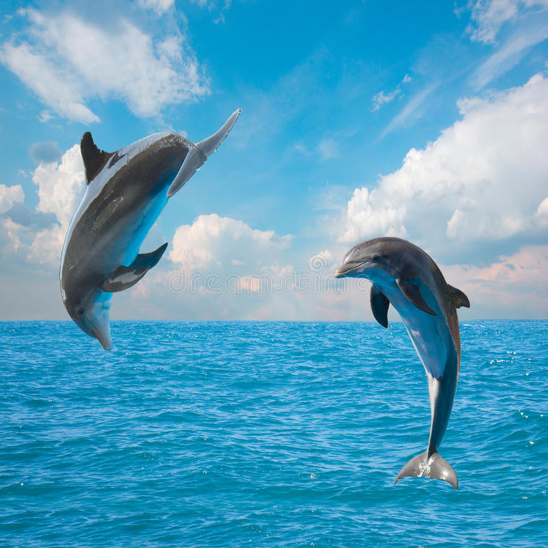 Dois golfinhos de salto imagem de stock