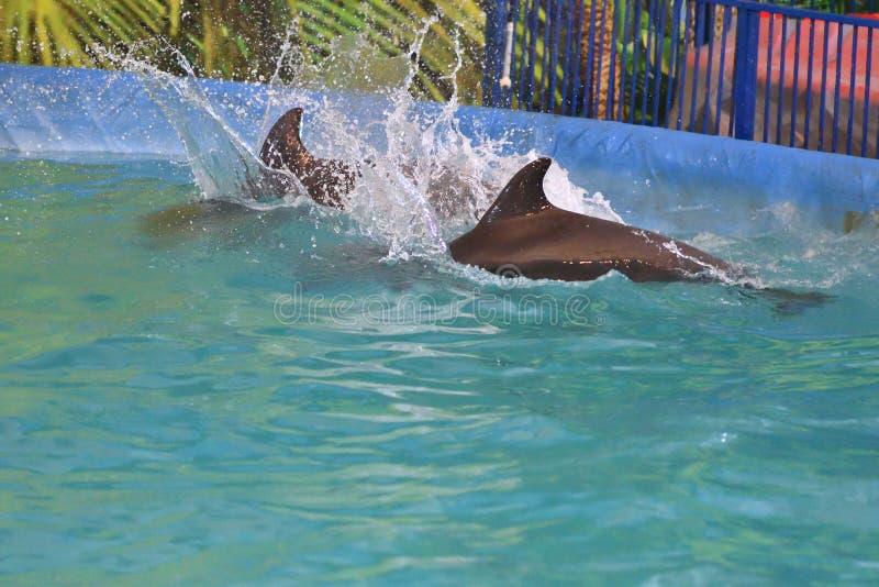 Dois golfinhos na água imagens de stock royalty free