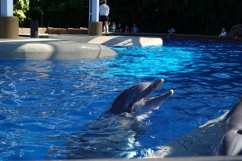 Dois golfinhos na ?gua foto de stock royalty free