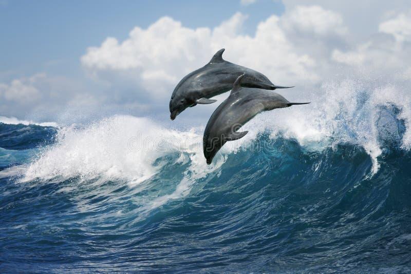 Dois golfinhos que saltam sobre a onda fotos de stock