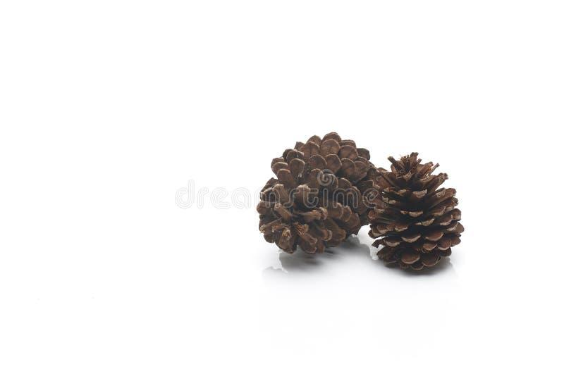 Dois grandes de cones do pinho fotografia de stock royalty free
