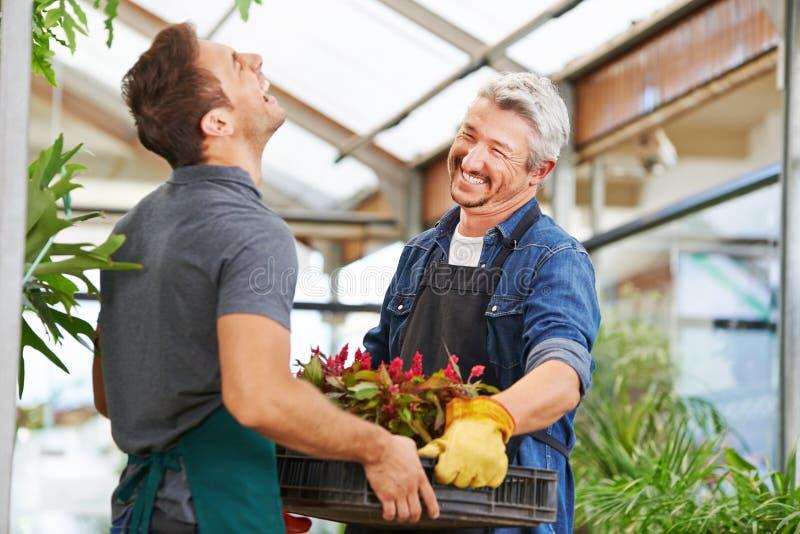 Dois homens como floristas na jardinagem fotografia de stock royalty free