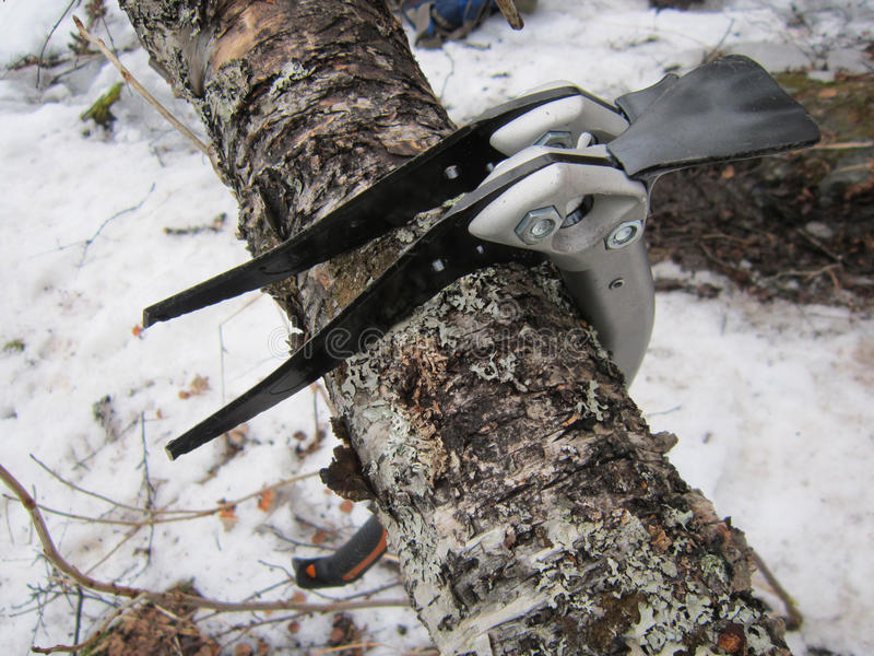 Dois icetools na árvore imagem de stock royalty free