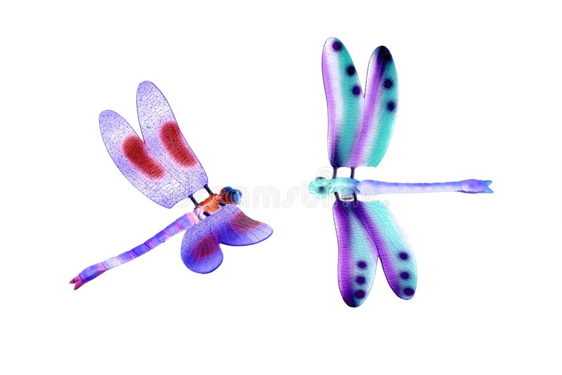 Dois insetos de vôo coloridos da libélula isolados imagens de stock