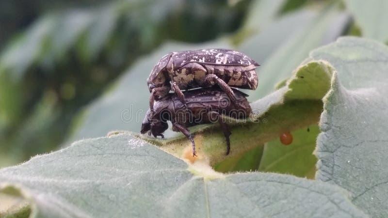 Dois insetos na árvore imagens de stock