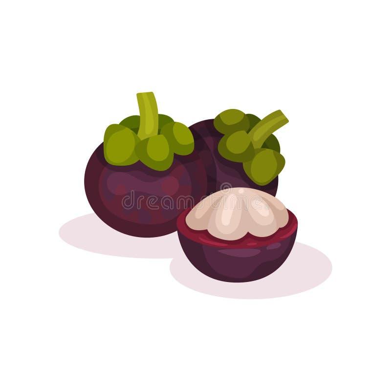Dois inteiros e um meio do mangustão Fruto exótico maduro Alimento orgânico e saboroso Projeto liso detalhado do vetor ilustração do vetor