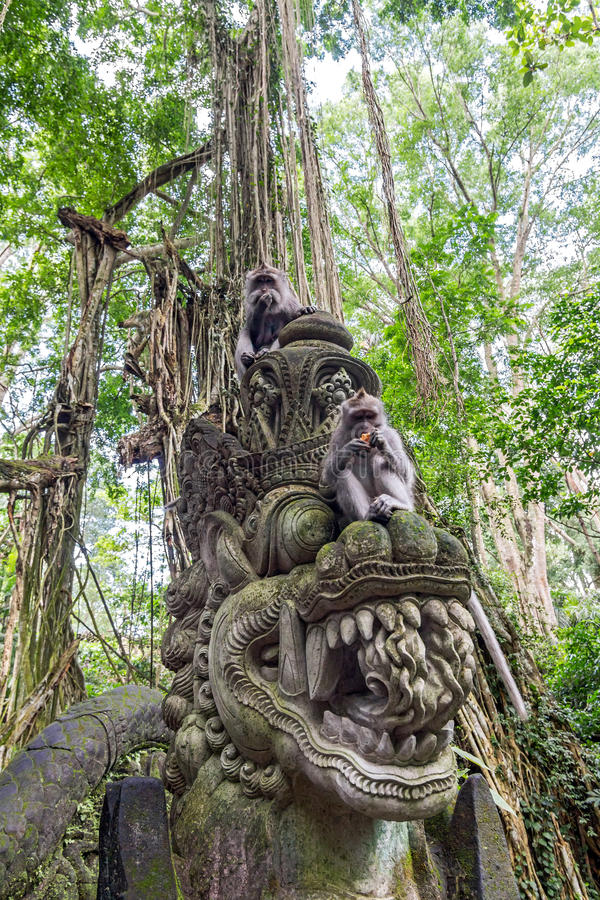 Dois macacos comer na floresta de Bali Ubud foto de stock royalty free