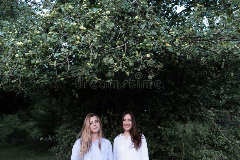 Dois melhores amigos das moças sob a árvore verde no parque do verão imagens de stock royalty free