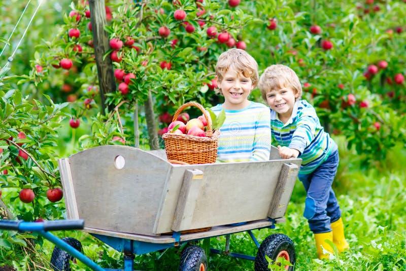Dois meninos das crianças que escolhem maçãs vermelhas no outono da exploração agrícola imagem de stock