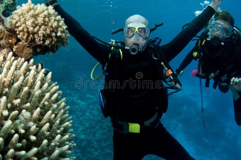 Dois mergulhadores de mergulhador imagem de stock