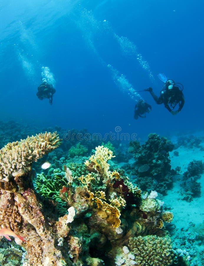 Dois mergulhadores de mergulhador em um mergulho fotografia de stock royalty free