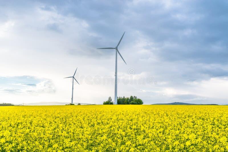 Dois moinhos de vento que estão em um campo da violação em um dia nebuloso, ventoso em República Federal da Alemanha fotos de stock royalty free