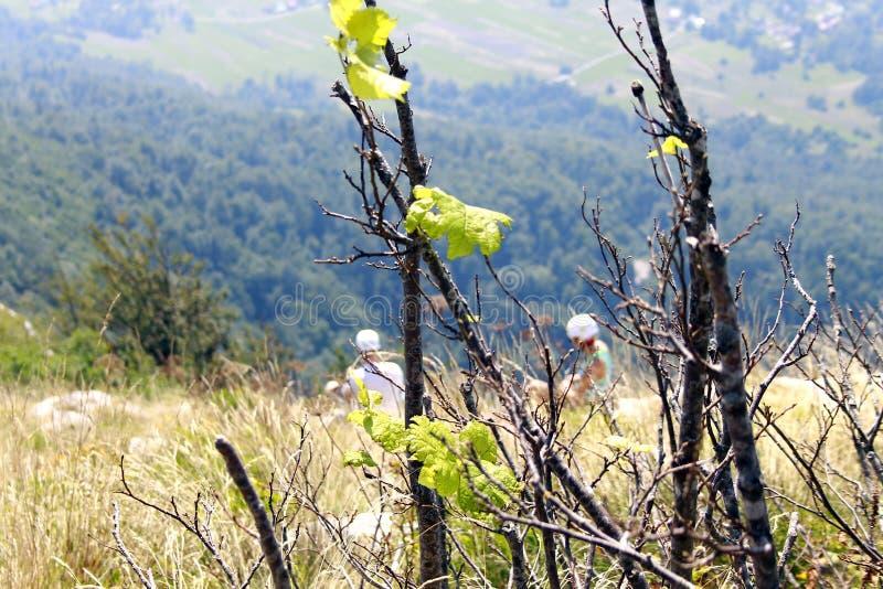 Dois montanhistas de montanha que descansam na parte superior imagem de stock