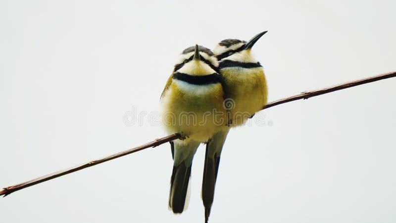 Dois pássaros foto de stock