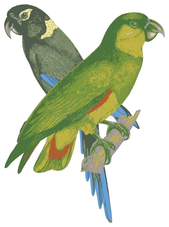 Dois pássaros do amor. ilustração stock