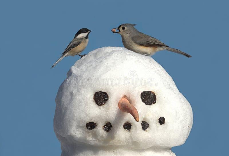 Dois pássaros em um boneco de neve imagem de stock