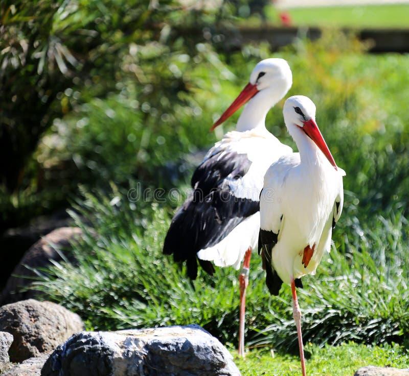Dois pássaros, um par fotografia de stock royalty free
