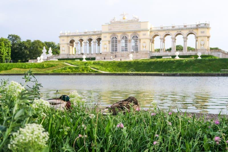Dois patos bonitos que relaxam na frente de Kleine Gloriette em Schön fotografia de stock