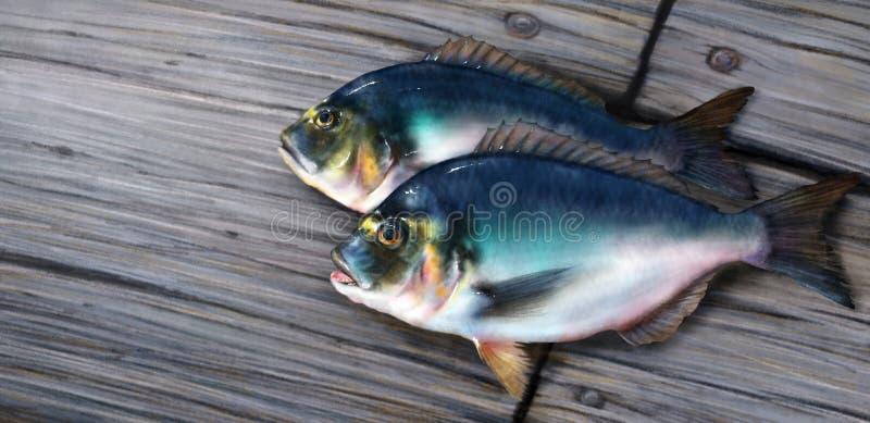 Dois peixes azuis do dorado na ilustração da placa de madeira ilustração do vetor