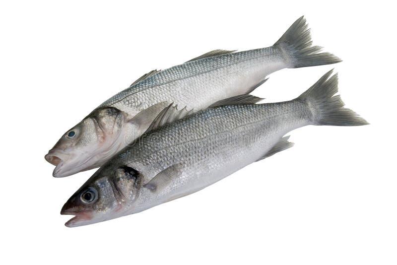 Dois peixes baixos no fundo branco fotos de stock