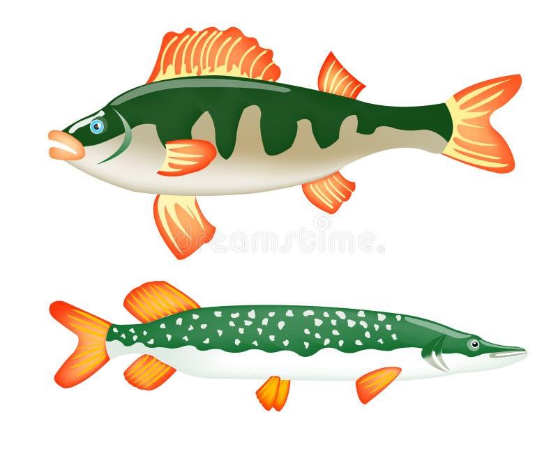 Dois peixes de água doce empoleiram-se e pique ilustração royalty free