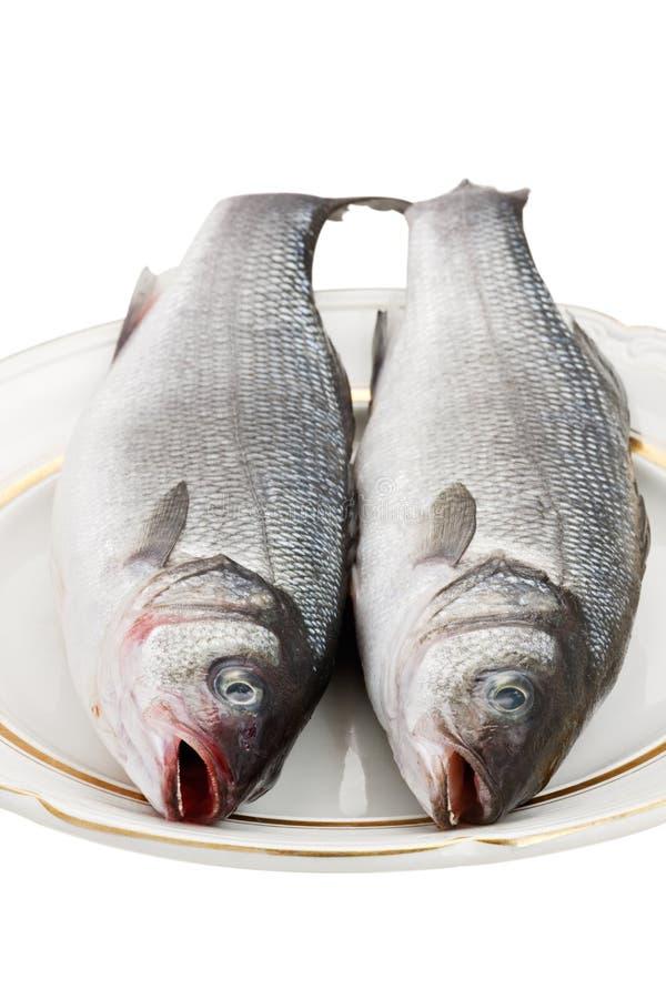 Dois peixes do Seabass em uma placa imagem de stock royalty free
