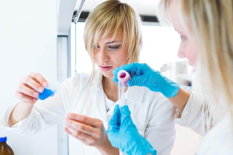 Dois pesquisadores fêmeas que trabalham em um laboratório imagem de stock royalty free