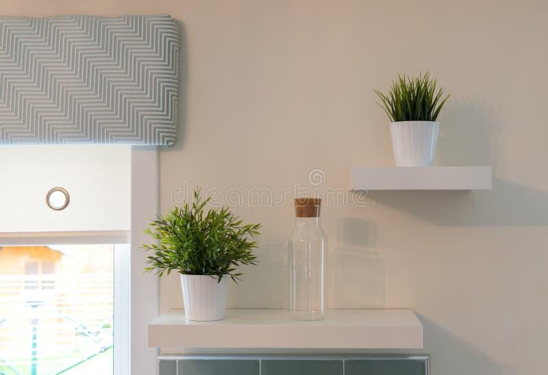 Dois plantas & frascos no shelving da cozinha foto de stock royalty free