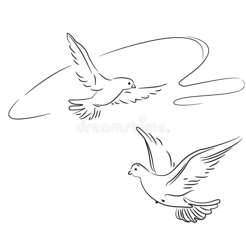 Download Dois pombos no vôo. Esboço ilustração do vetor. Ilustração de escova - 12805304