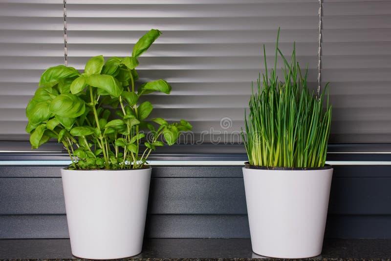Dois potenciômetros com as ervas na cozinha imagens de stock