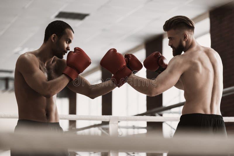 Dois pugilistas masculinos durante o boxe de treino no anel de encaixotamento foto de stock royalty free