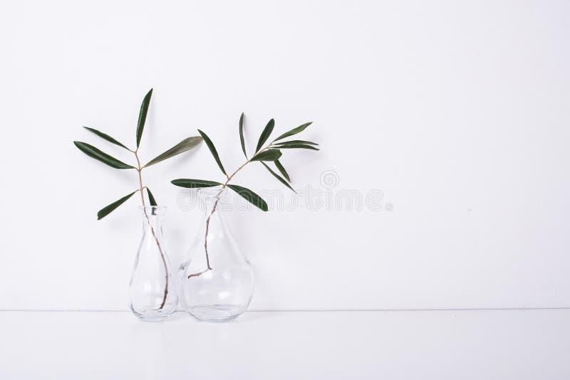 Dois ramos de oliveira nas garrafas de vidro imagens de stock