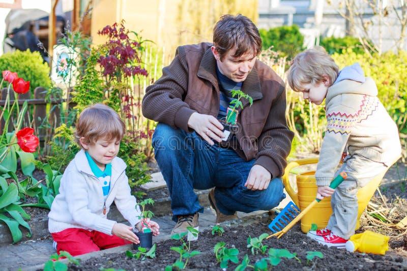 Dois rapazes pequenos e pai que plantam plântulas em garde vegetal imagem de stock royalty free