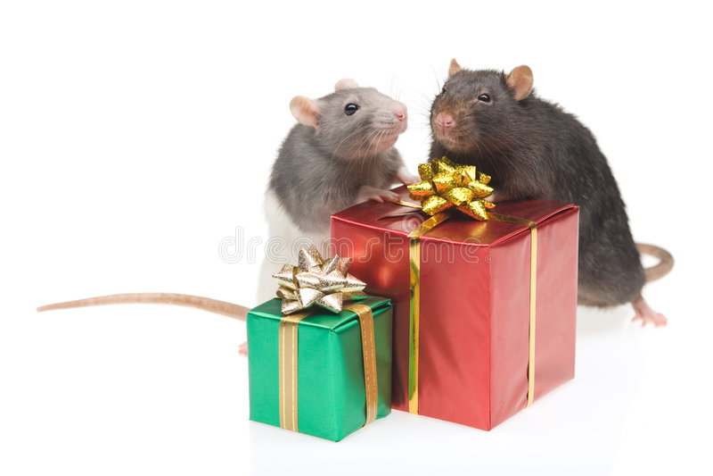 Dois ratos com presentes envolvidos fotografia de stock