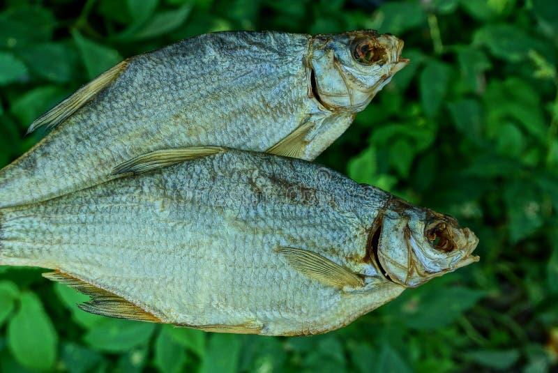 Dois secaram peixes em um fundo das folhas verdes fotos de stock royalty free
