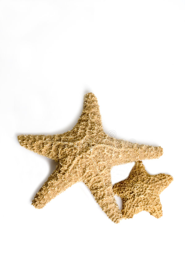 Dois starfish fotografia de stock