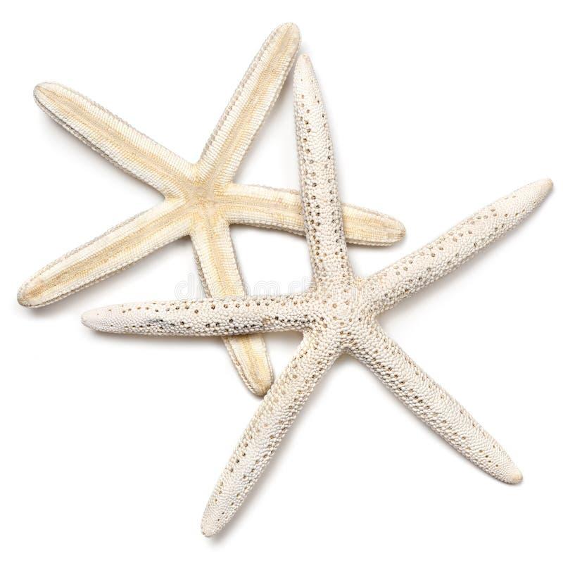 Dois Starfish sobre o branco imagens de stock