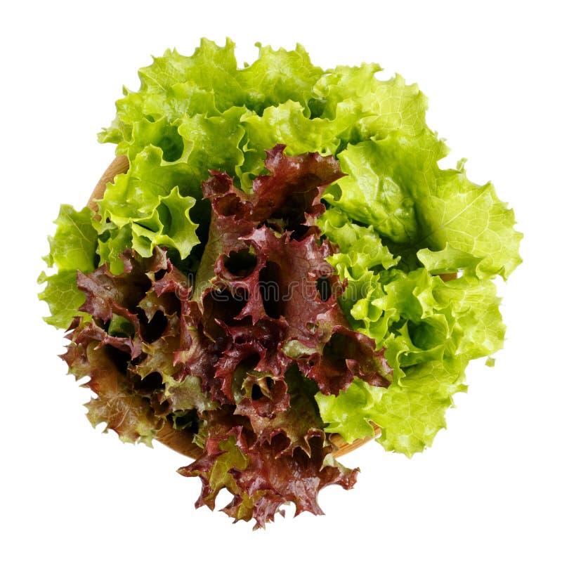 Dois tipos das folhas frescas da salada da alface em uma bacia de madeira isolada no branco Vista superior imagem de stock