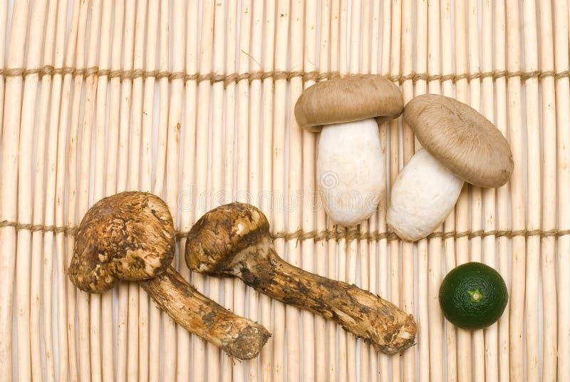 Download Dois tipos do cogumelo foto de stock. Imagem de cogumelos - 16868514