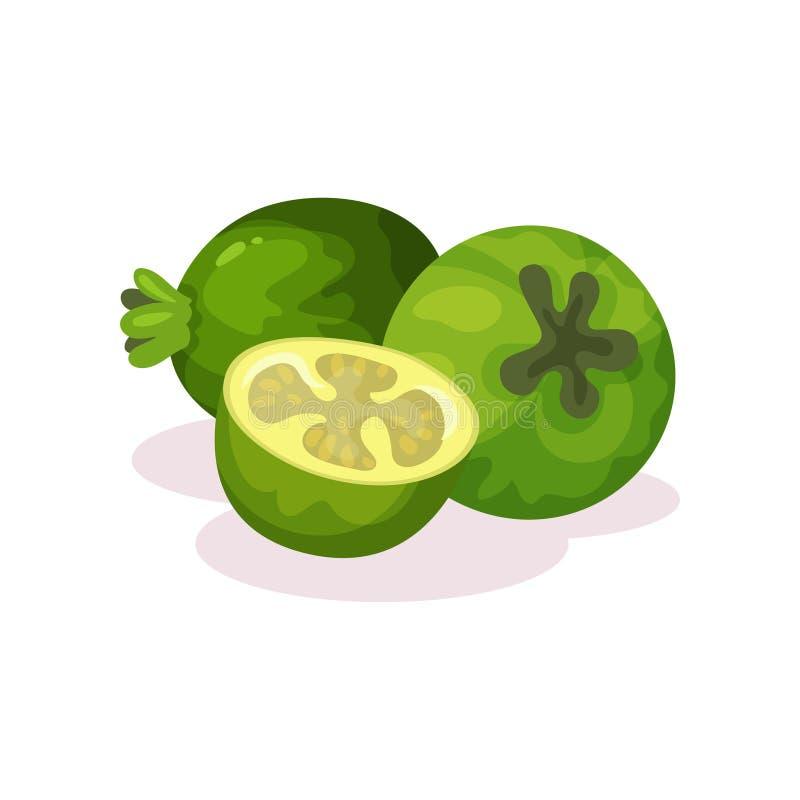 Dois todo e metades do feijoa maduro Fruta tropical Nutrição do vegetariano Alimento biológico Projeto liso detalhado do vetor ilustração do vetor