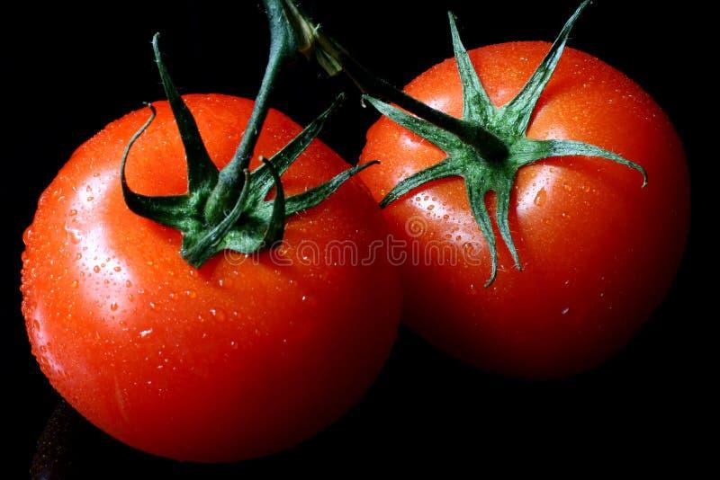 Dois tomates molhados fotografia de stock