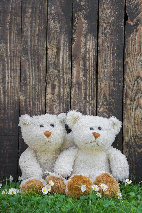 Dois ursos de peluche bonitos que sentam-se antes de uma parede de uma madeira velha Idéia imagens de stock