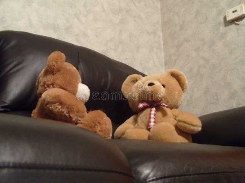 Dois ursos peludos sentados no sofá a debater fotografia de stock