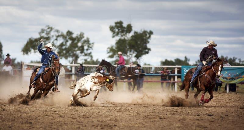 Dois vaqueiros que Roping uma vitela em um rodeio foto de stock royalty free