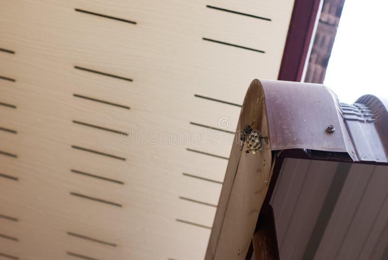 Dois zangões que tomam de seu ninho que que cola na folha de metal sob o telhado fotos de stock royalty free